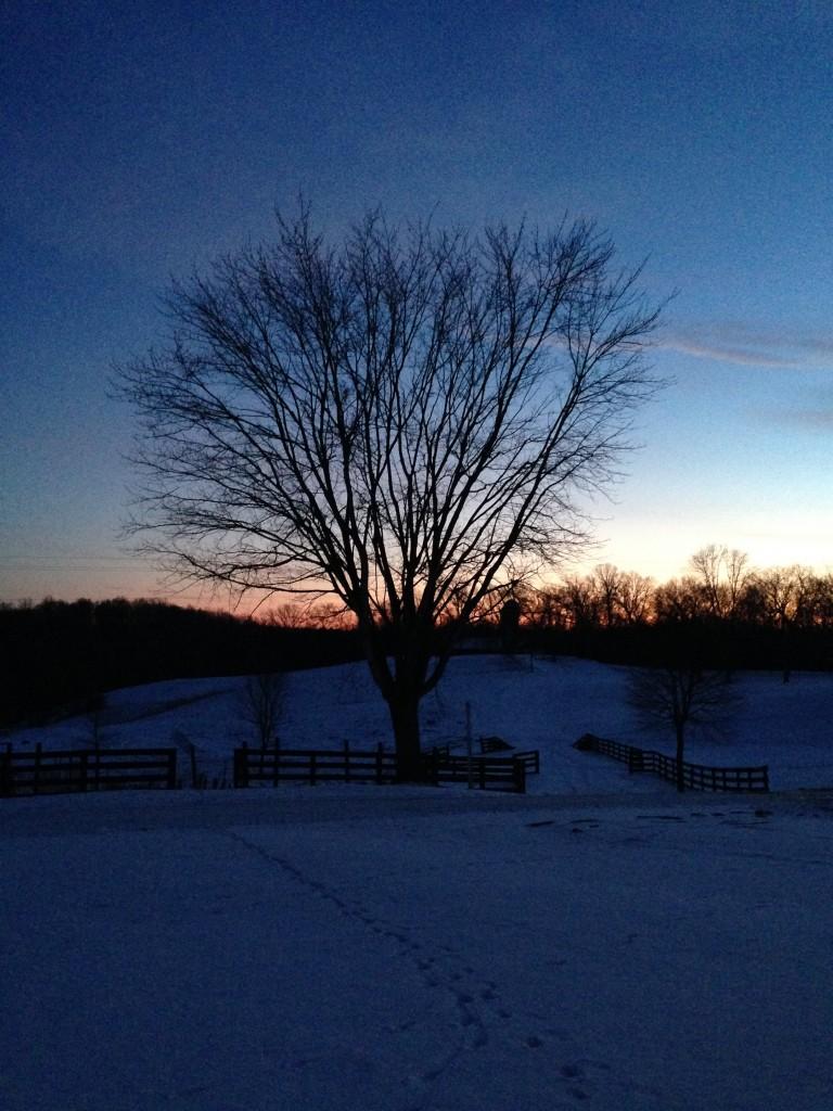 Meadowkirk Tree at Sunset