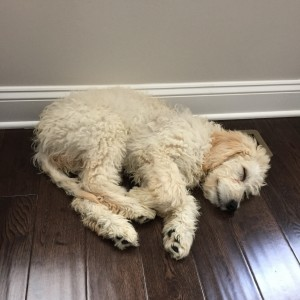 Asher sleeping 1